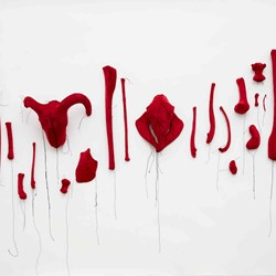Olga Cironis, Seeing Red, 1999, animal bones and velvet, installation dimensions variable